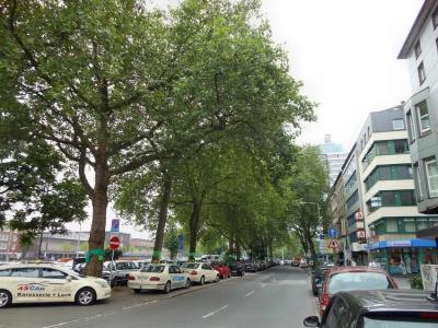 Platanenallee an der Mercatorstraße gegenüber vom Hauptbahnhof