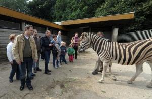 Der Presseverein Niederrhein-Ruhr e. V. übernimmt die Patenschaft für ein Zebra im Zoo Duisburg. Foto: Andreas Probst.