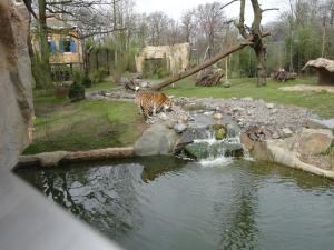 Eröffnung des Tigergeheges im Zoo Duisburg. Foto: Petra Grünendahl.
